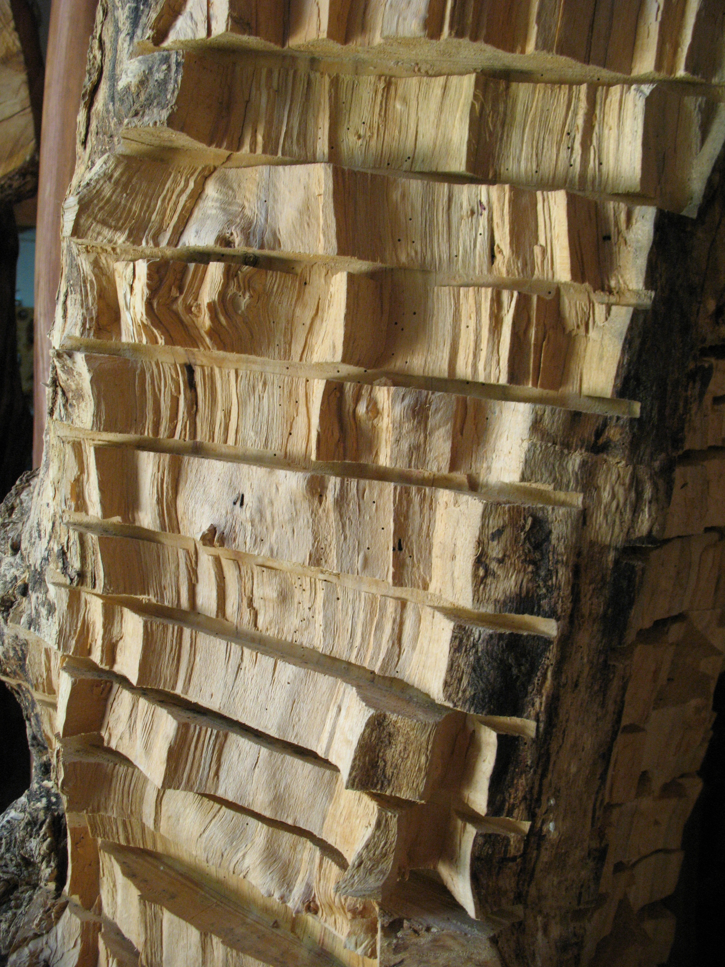 The above image of a box elder reveals the quirky pattern of chipping.