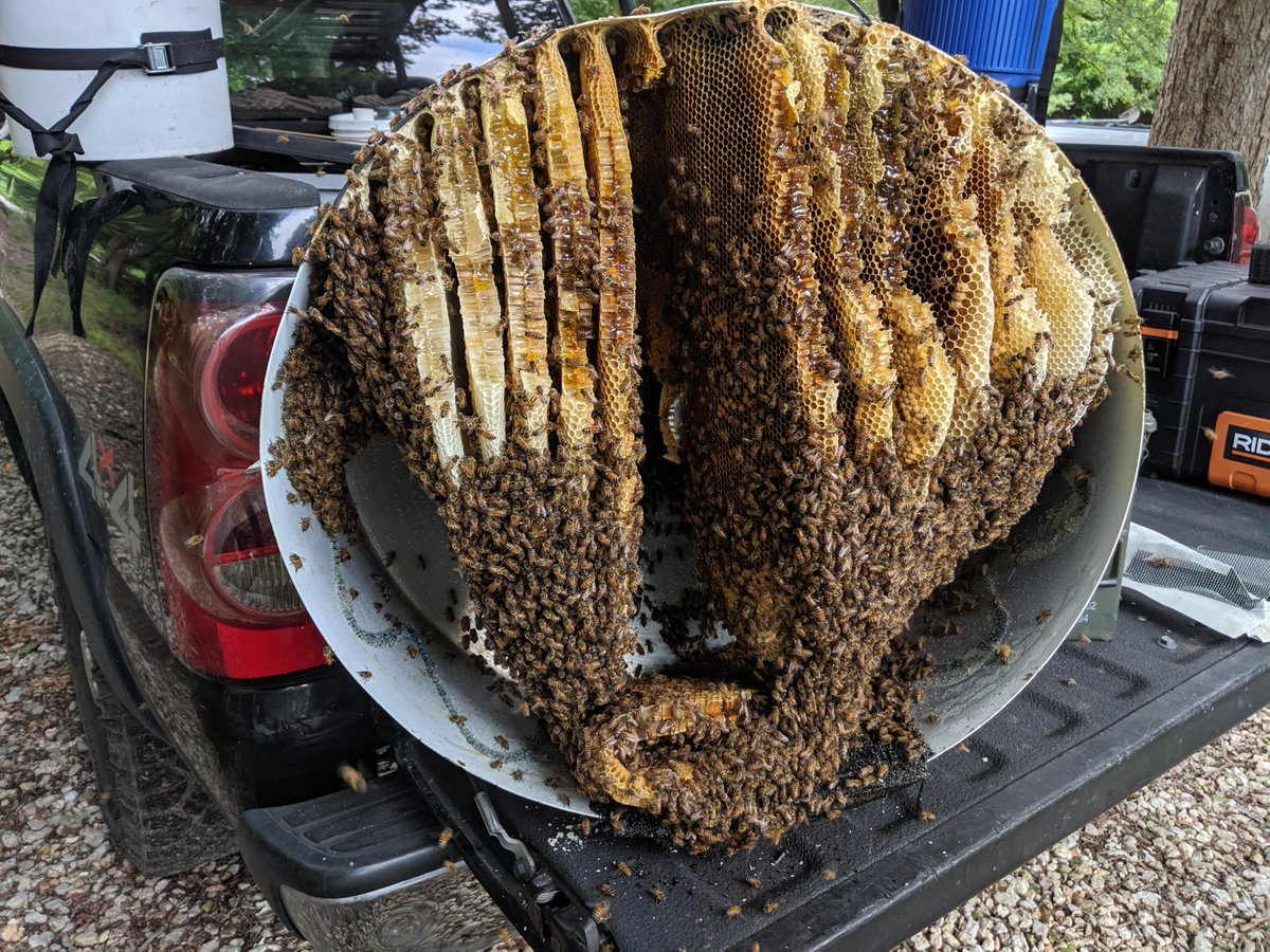 Bees in Cell Tower - How a Routine Tower Maintenance Call Turned into An Insect Intervention