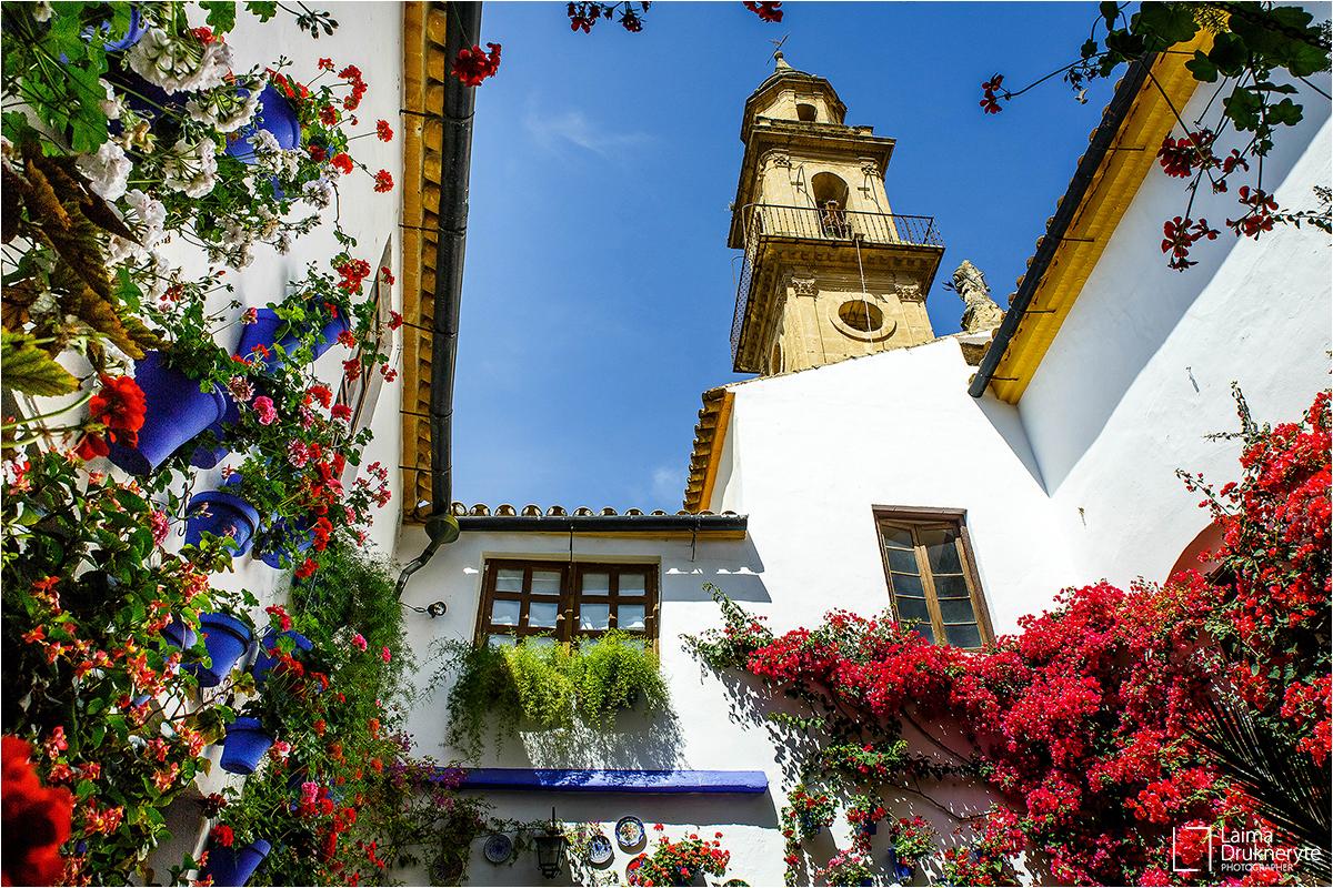 Flowering Cordoba's courtyards by Laima Drukneryte