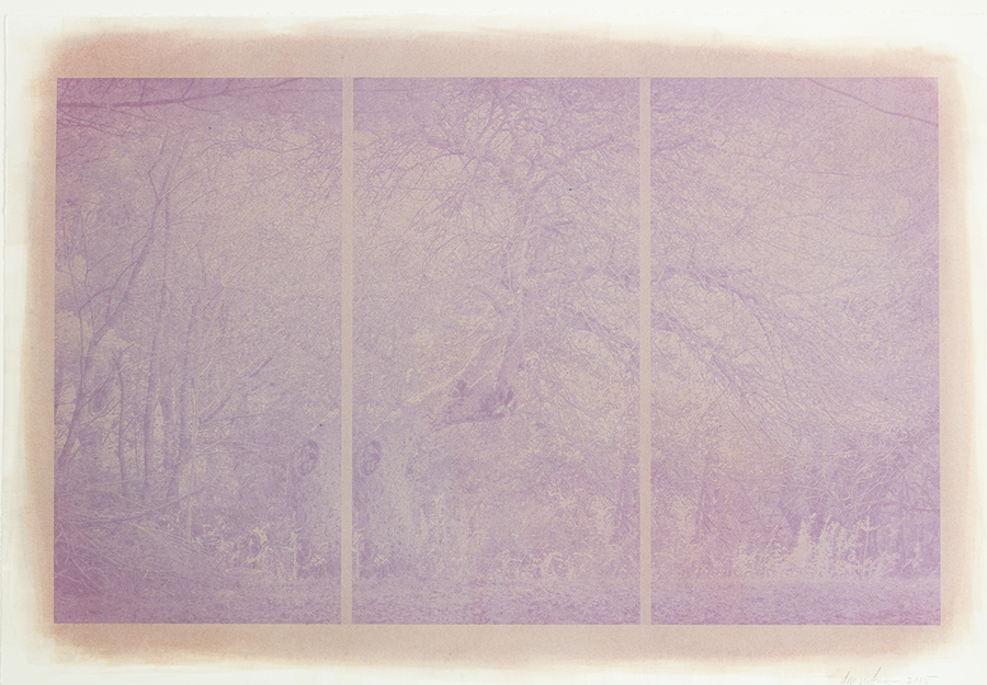 D.M. Witman, Mourning, 2014-2017, Anthotype from Maine huckleberries printed on Arches Platine, 13.25 x 21.5 inches