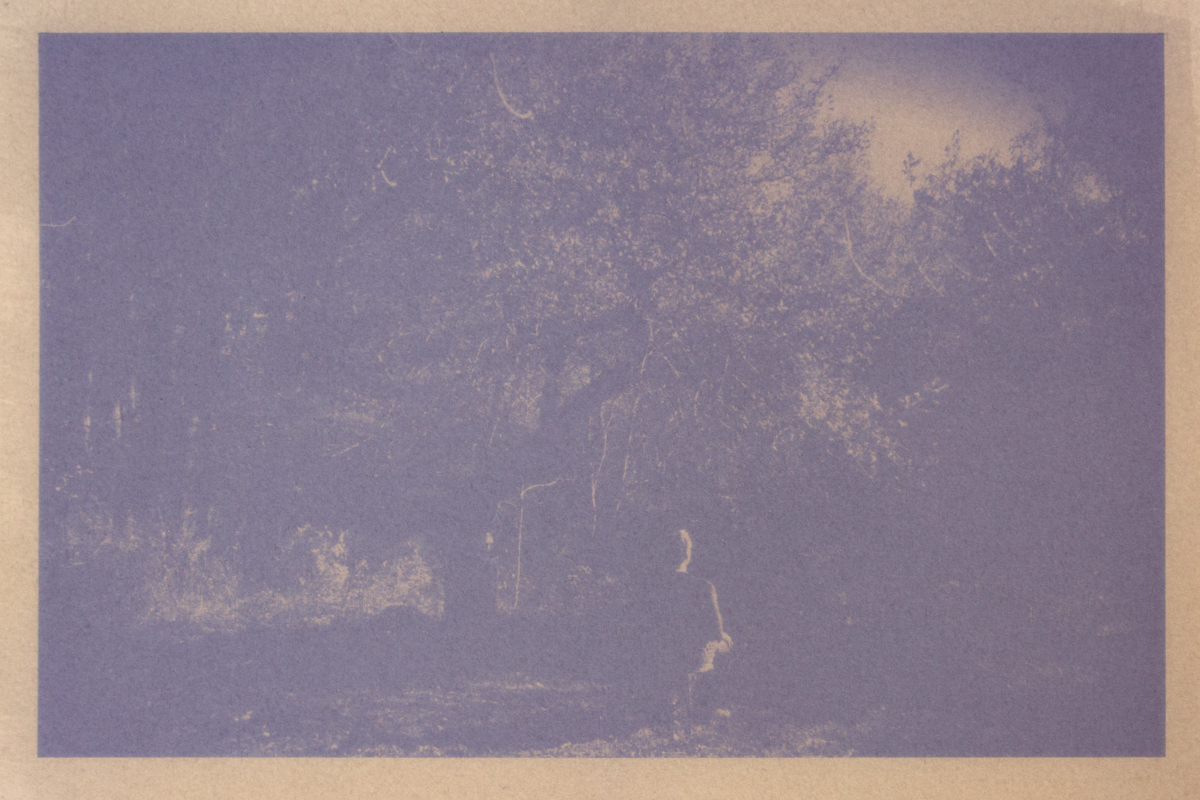 D.M.Witman,  Waiting , 2017, Anthotype from Maine blueberry printed on Rives BFK, 8 x 12 inches