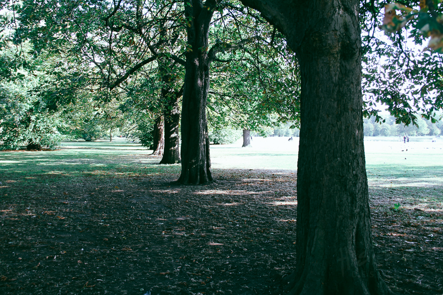 Trees at Hyde Park