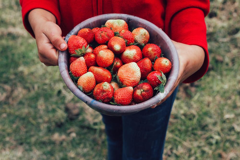 Strawberries on the road, (La Tigra, Honduras)