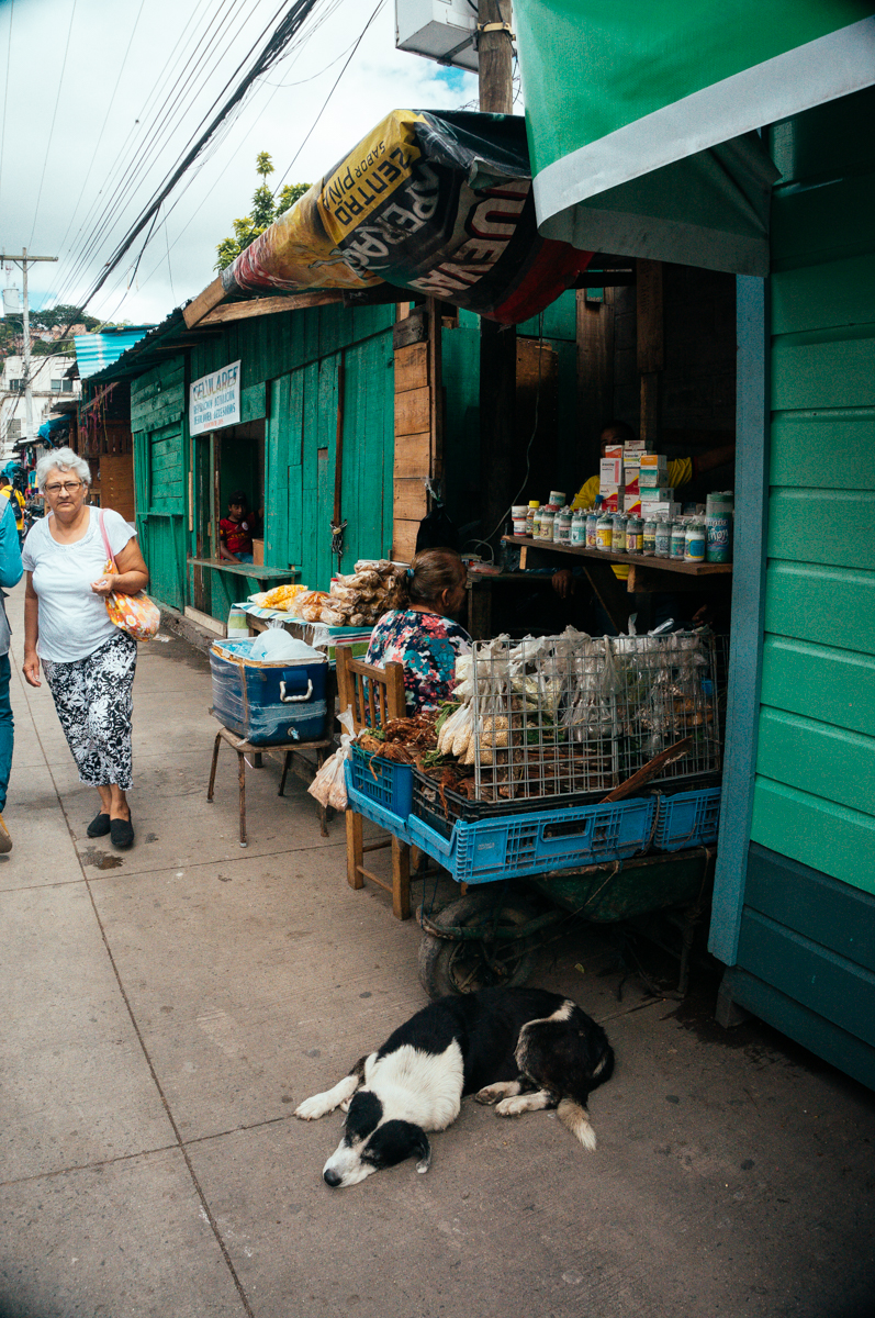 Market Stands & a Dog