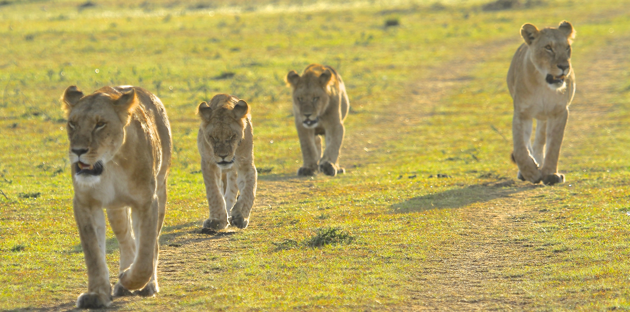 Four Girls of the Masai Mara
