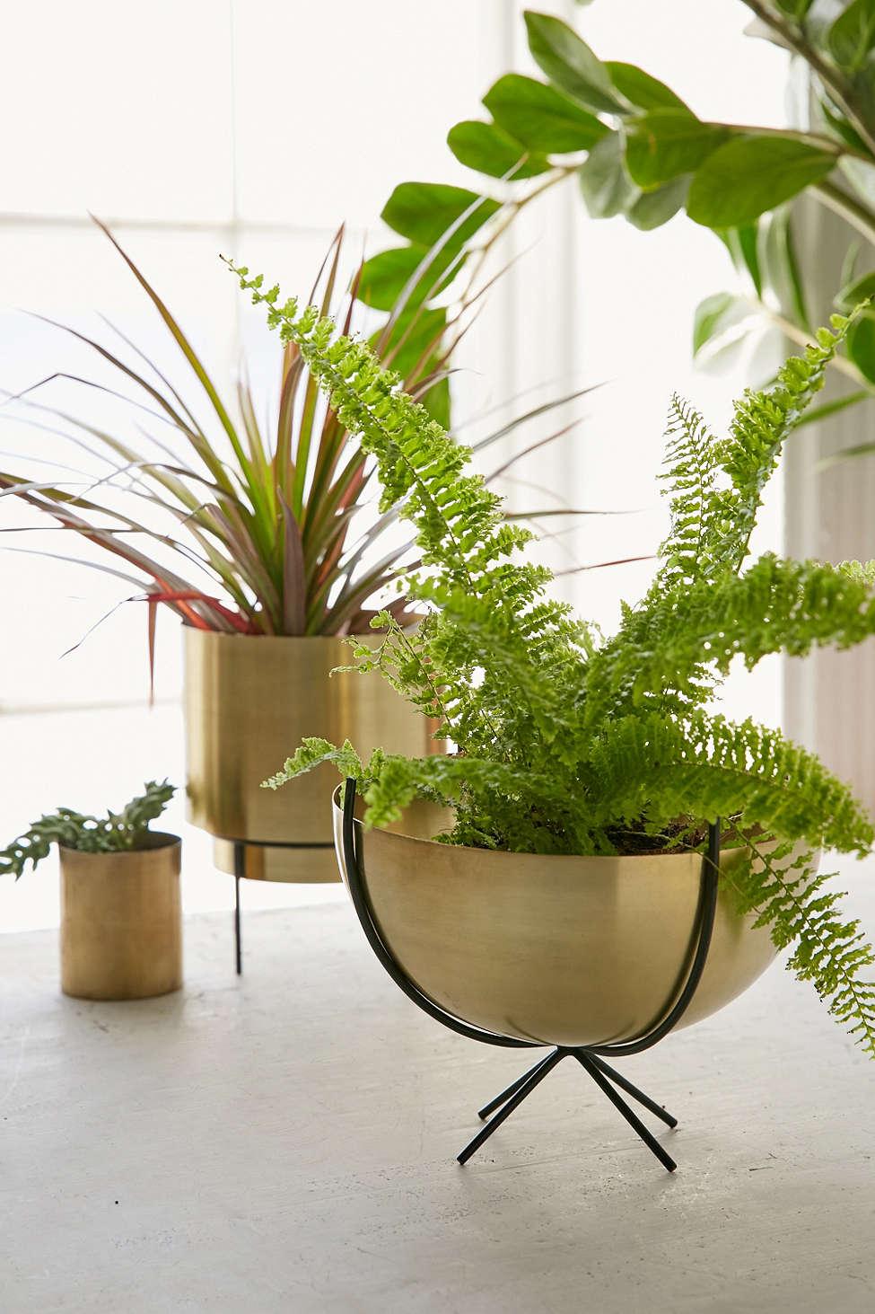 Brass planter