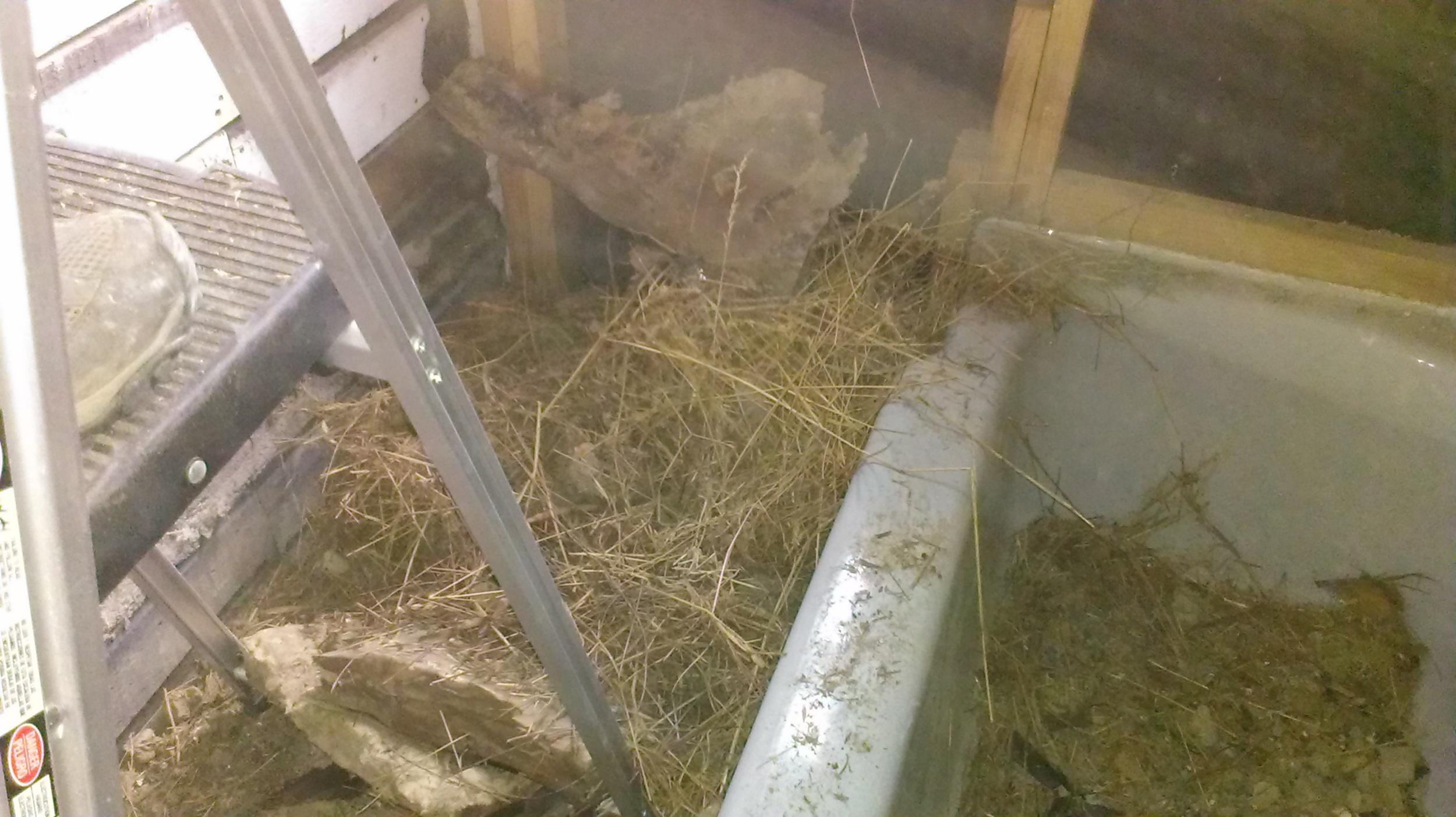 bathroom: squirrel nest in ceiling--yuck!