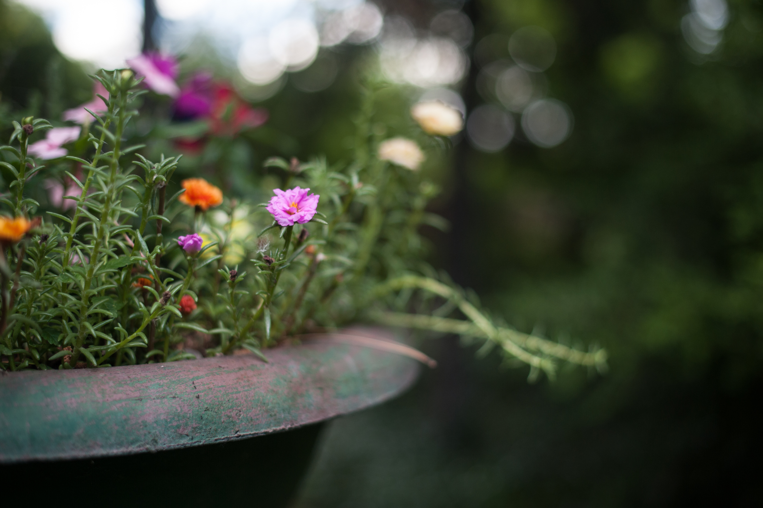 kayla kitts photography-albuquerque-new mexico-los plobanos-wedding-organic-intimate-romantic-lavender