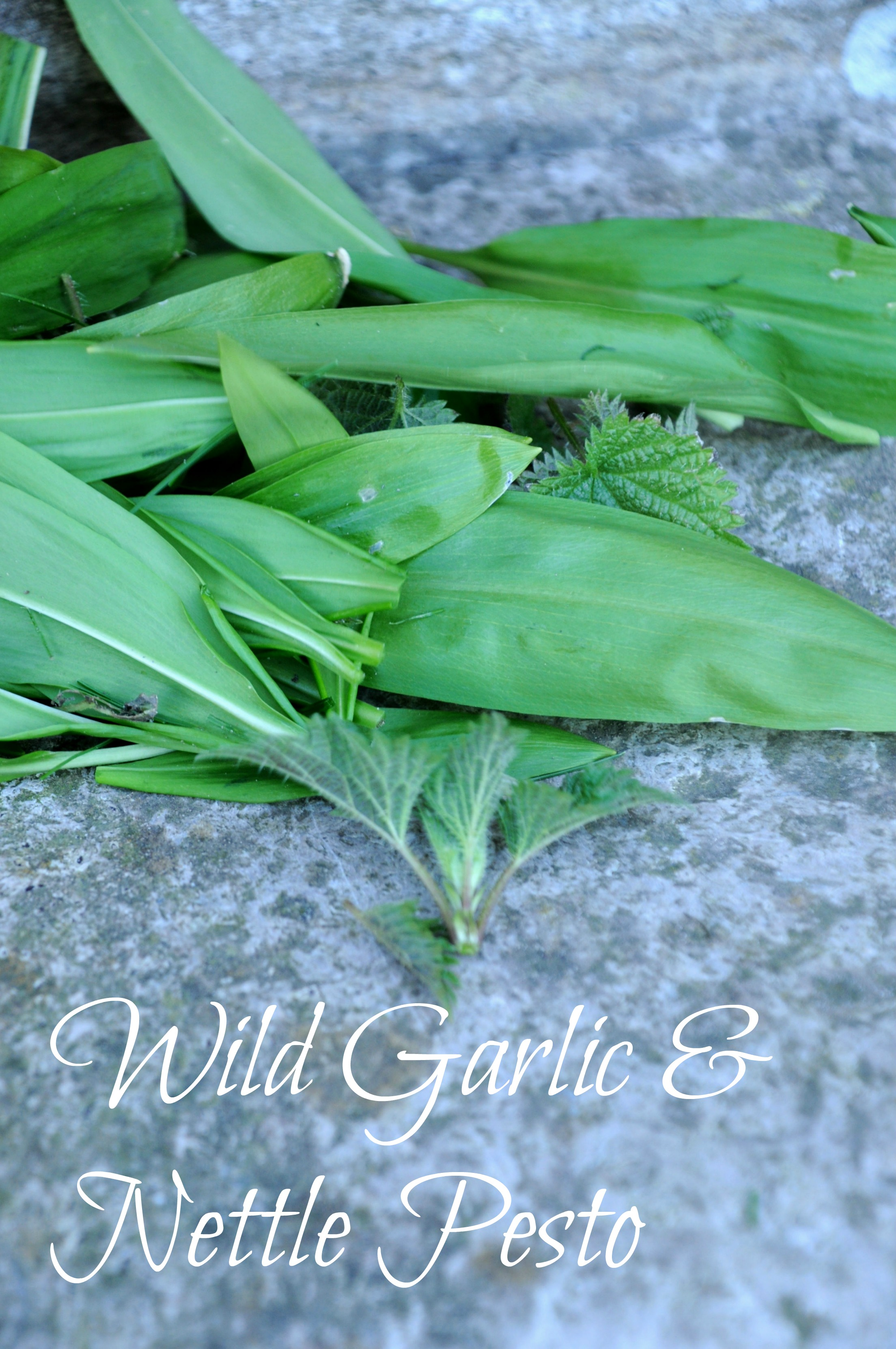 Wild Garlic and Nettle Pesto Recipe via A Playful Day