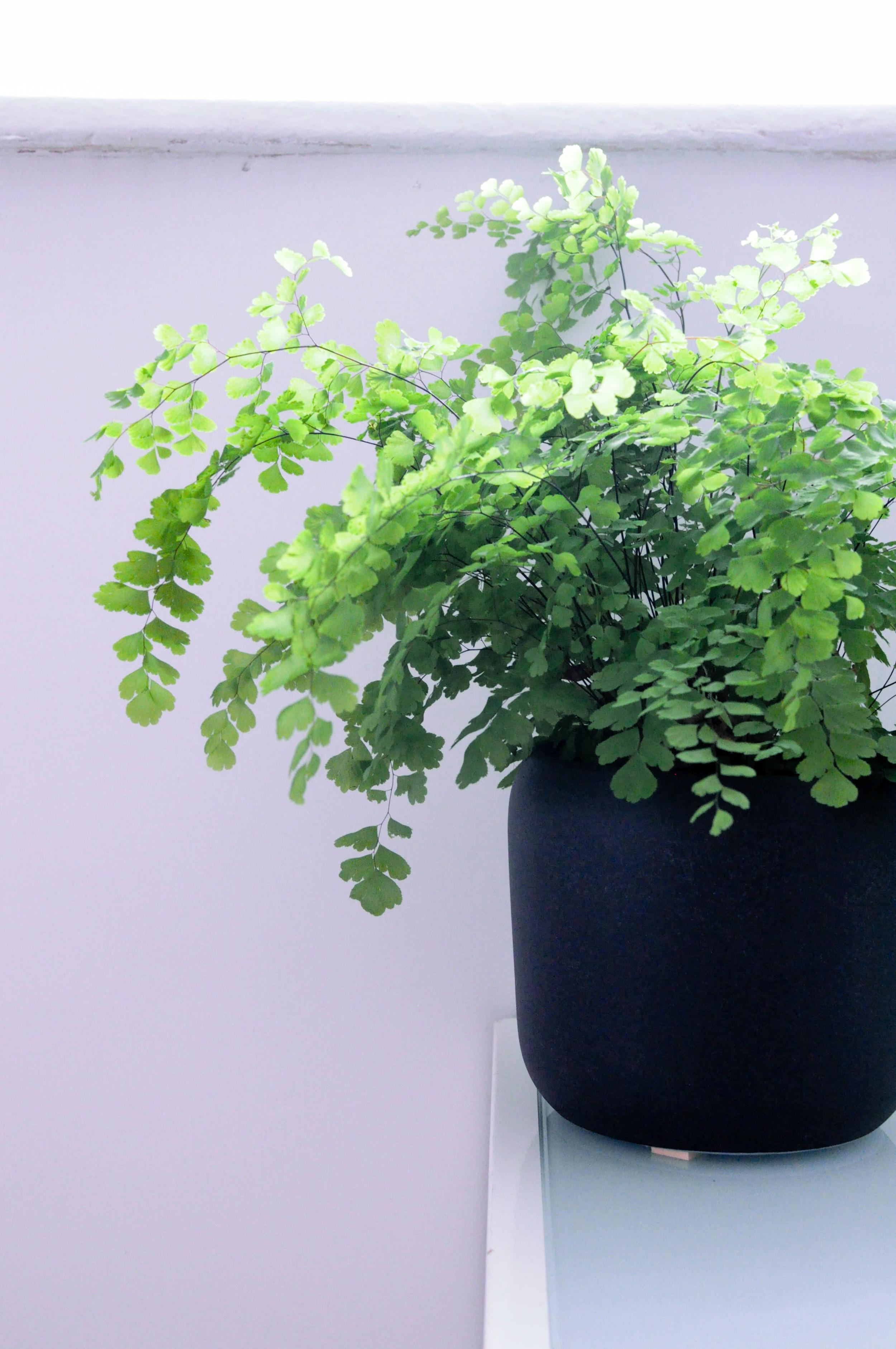 Botanicals in my home-3.jpg