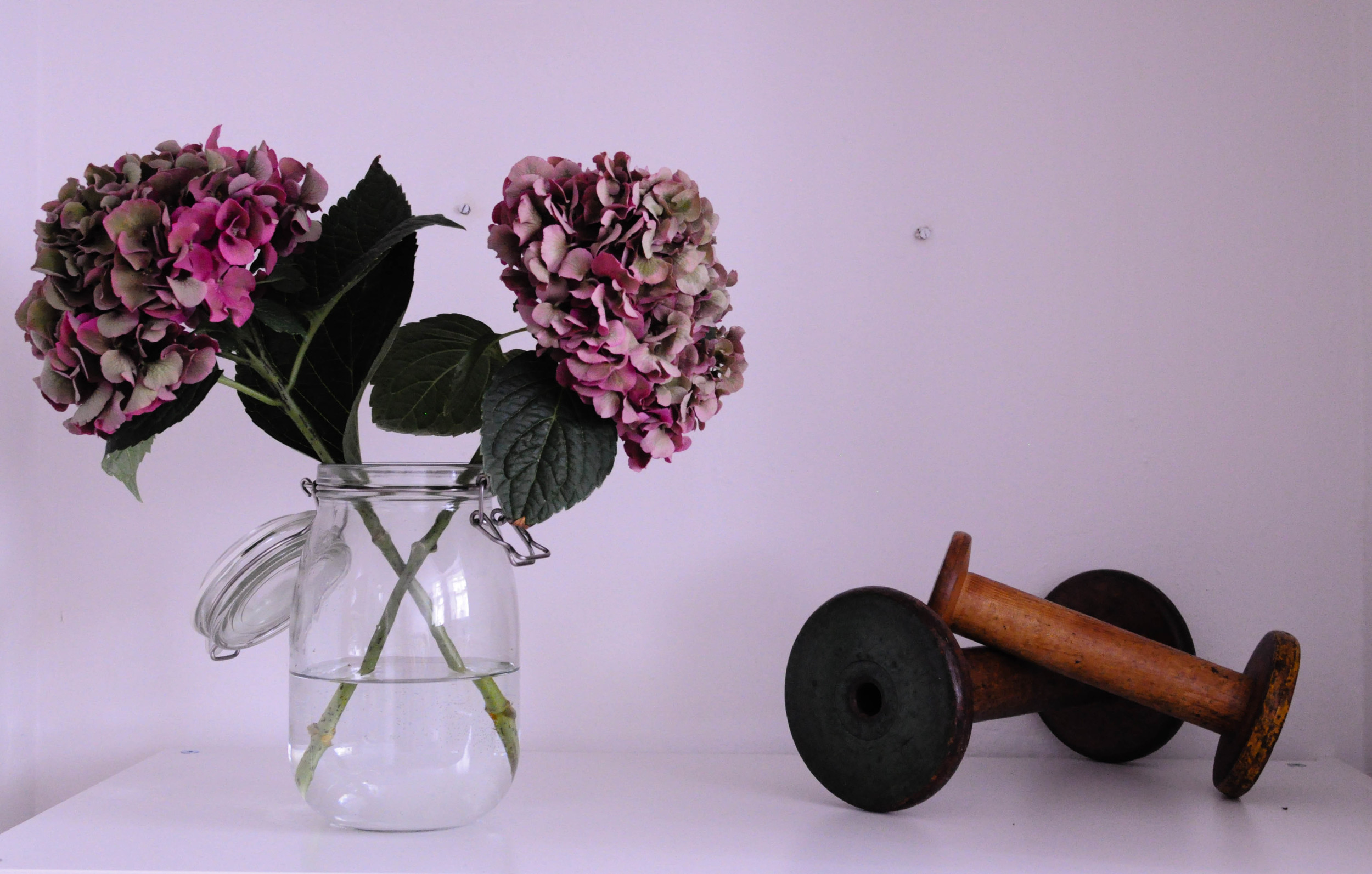 Botanicals in my home