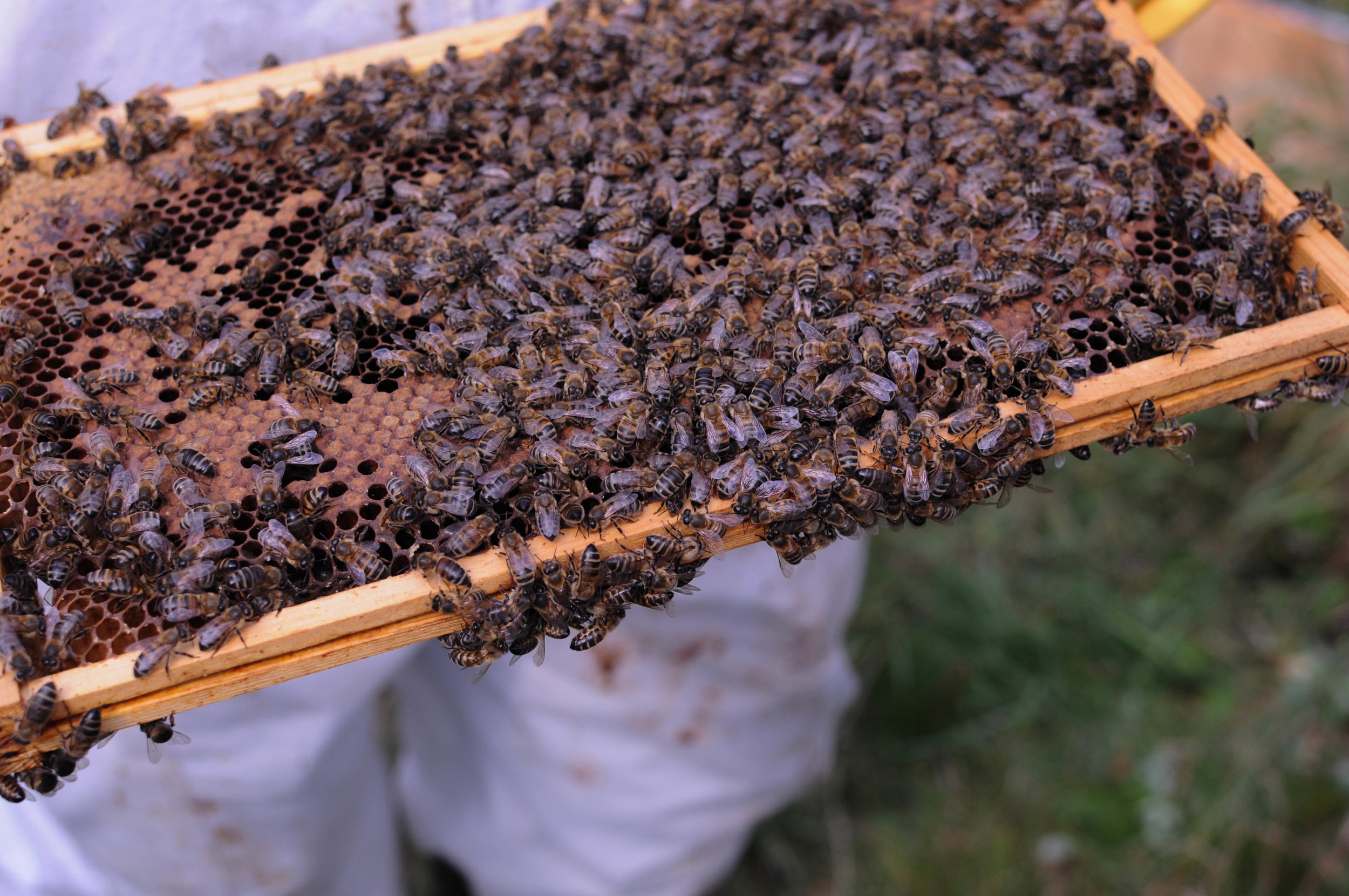 Bee Keeping 1-1.jpg