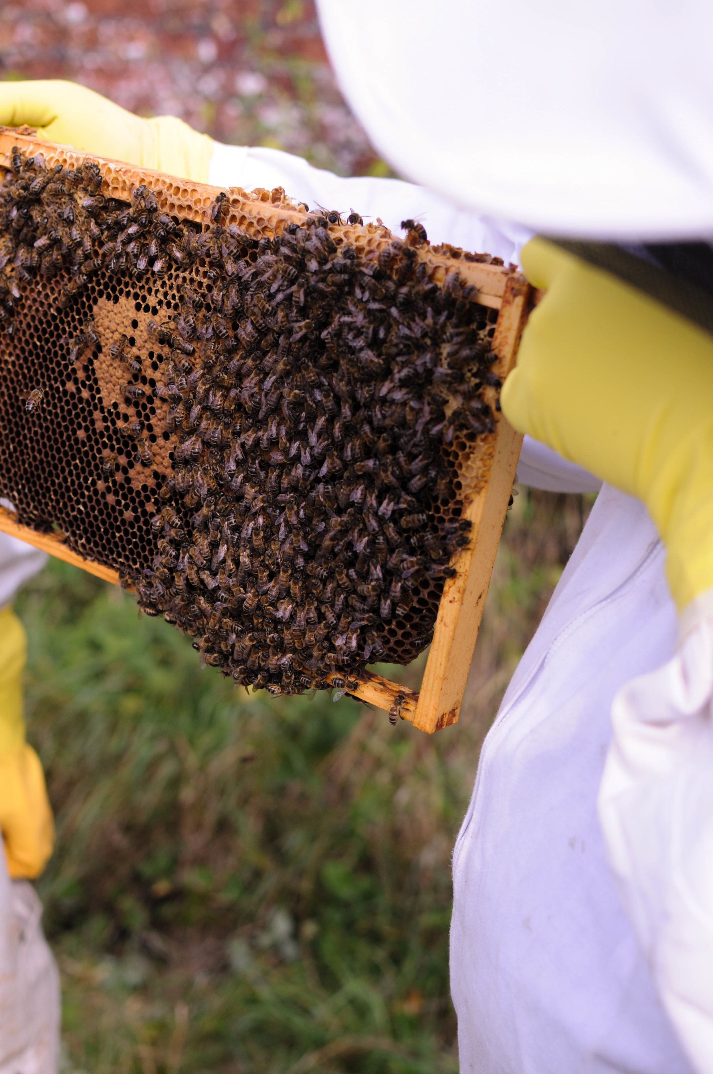 Bee Keeping-1.jpg