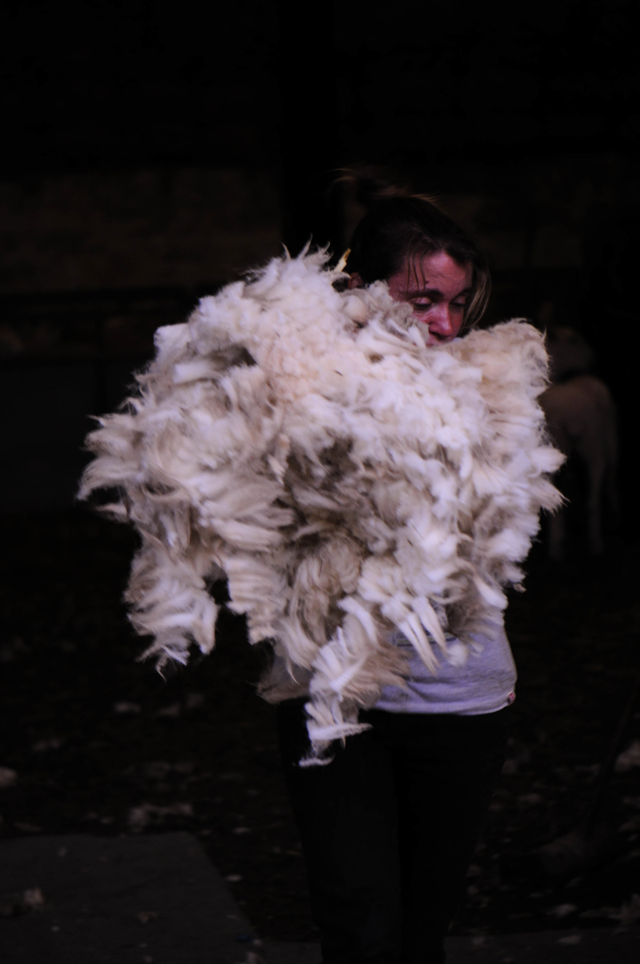 shepherdess during shearing-1.jpg