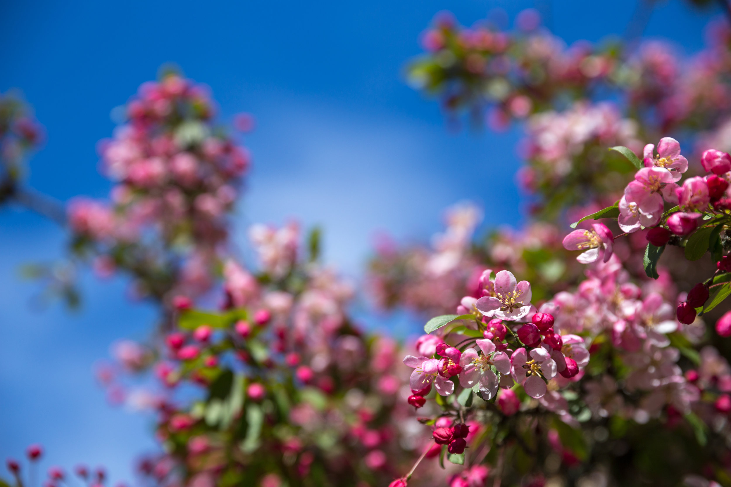 4 april 12th 2018 point defiance flowers flowering trees 5 stars-77.jpg