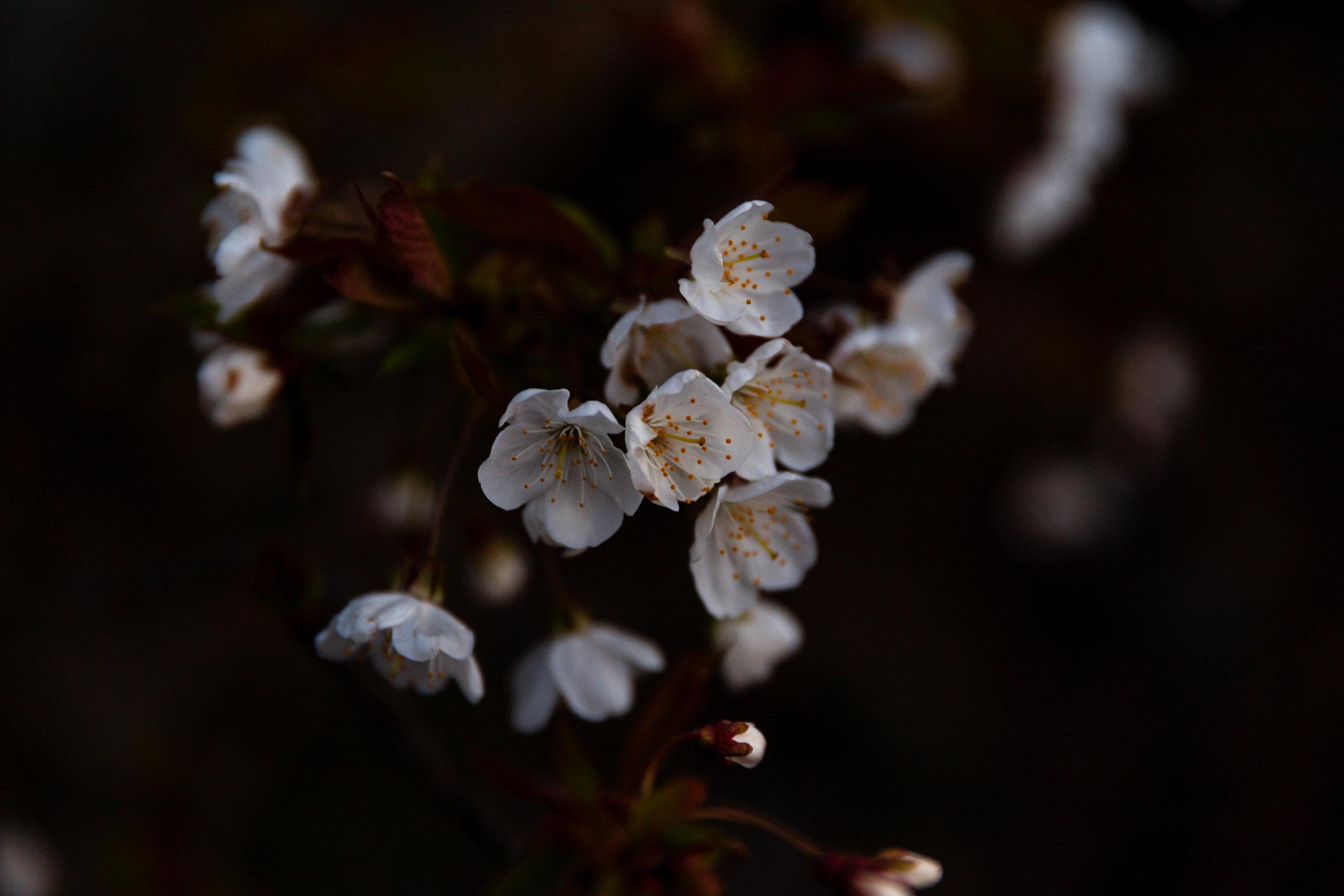 1 flower sunset titlow park april 19 2018 jenny l miller copy.jpg