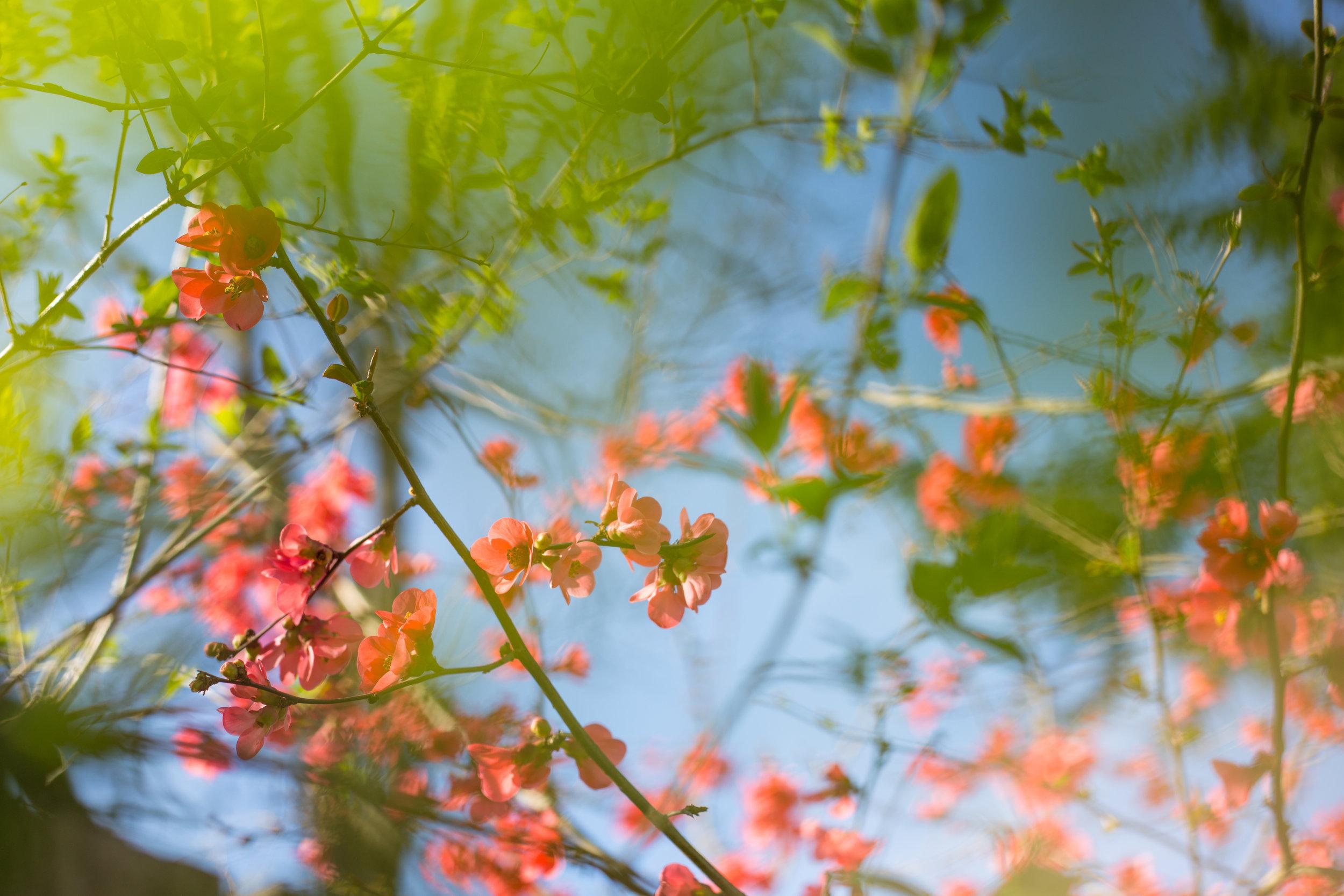 march flowers amiabelle 2015 jenny ryan-7.jpg