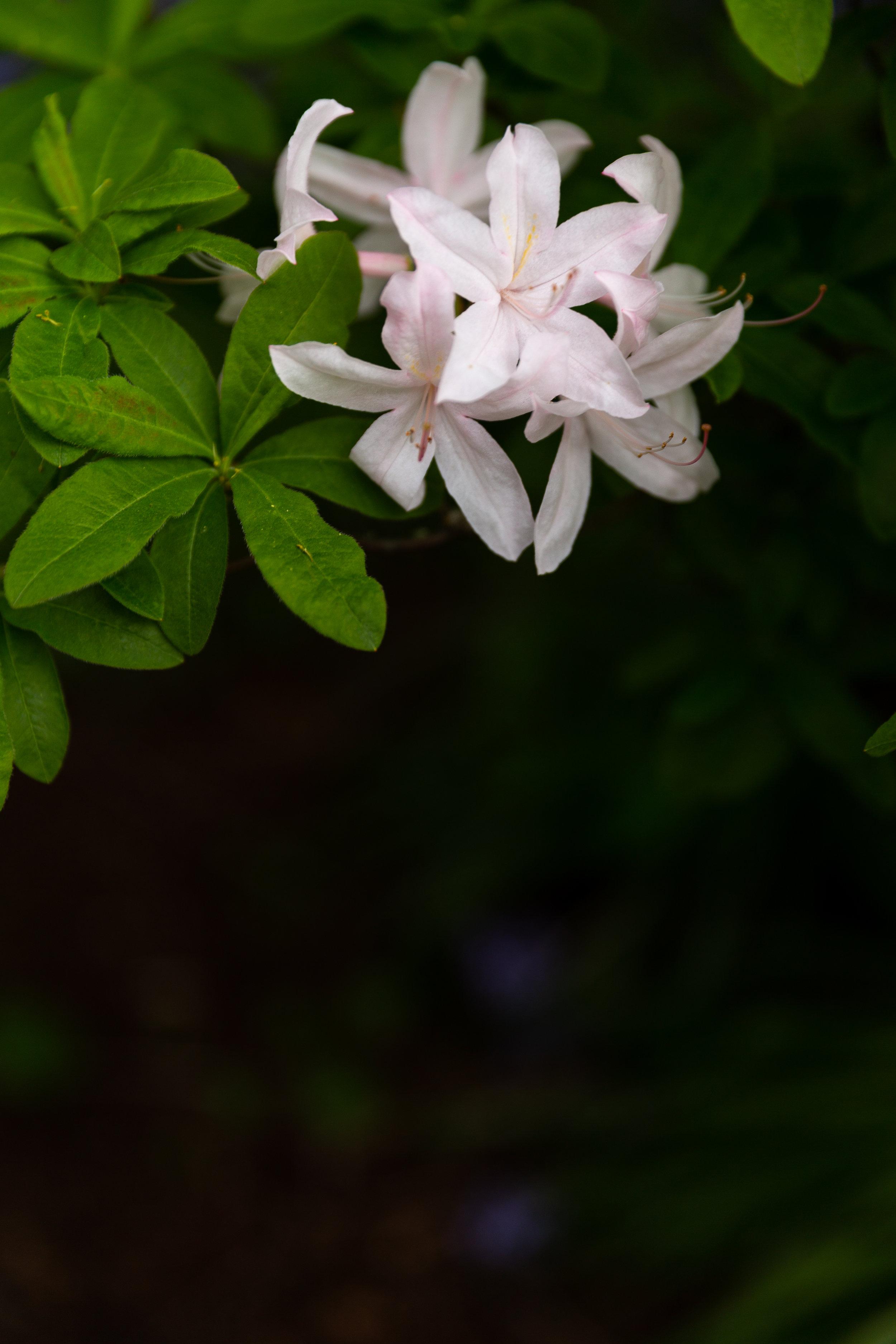 may 7 otis garden flowers oly 2018 5 star edits jenny l miller (8 of 368).jpg