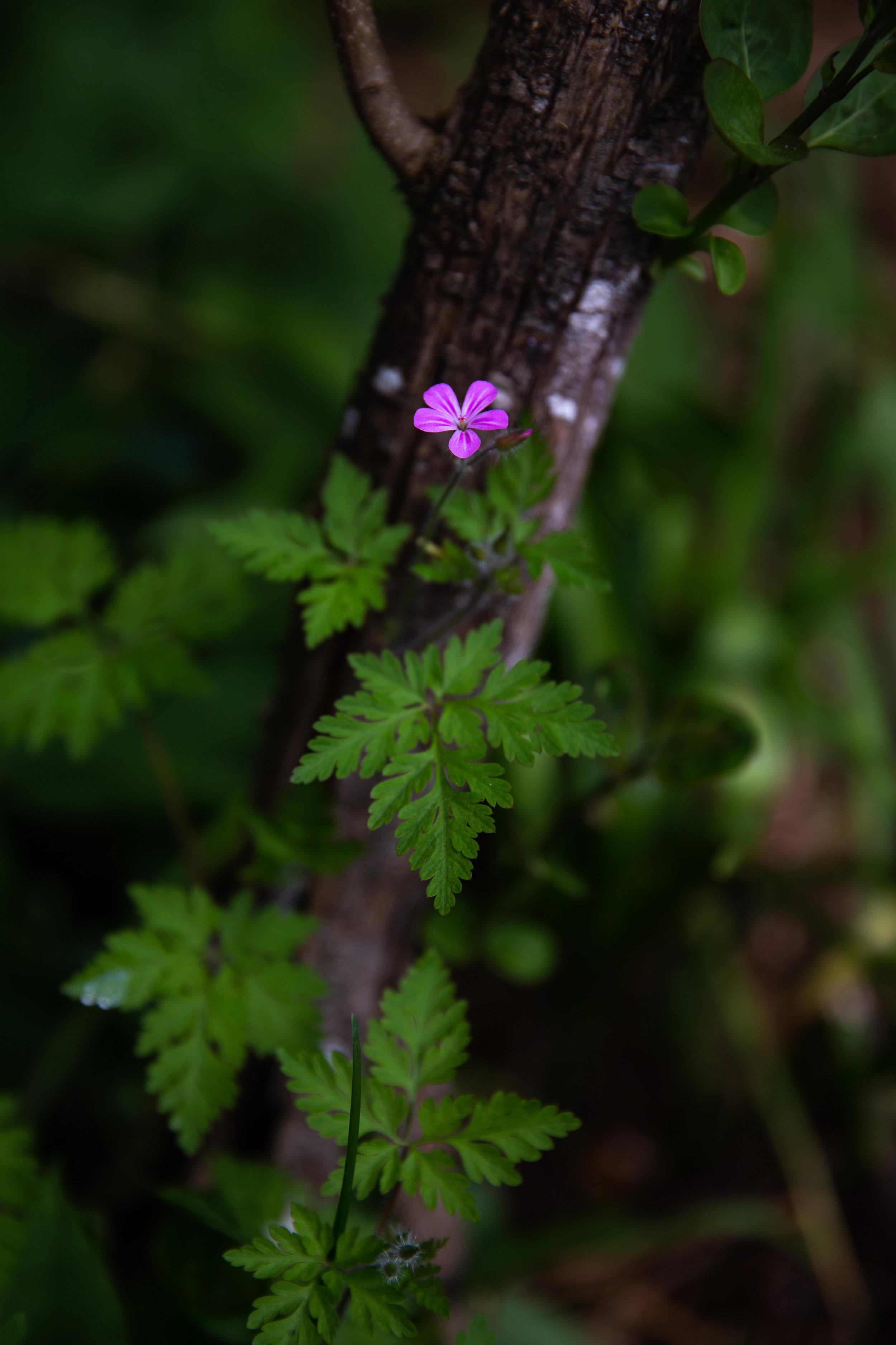 may 7 otis garden flowers oly 2018 5 star edits jenny l miller (67 of 368).jpg