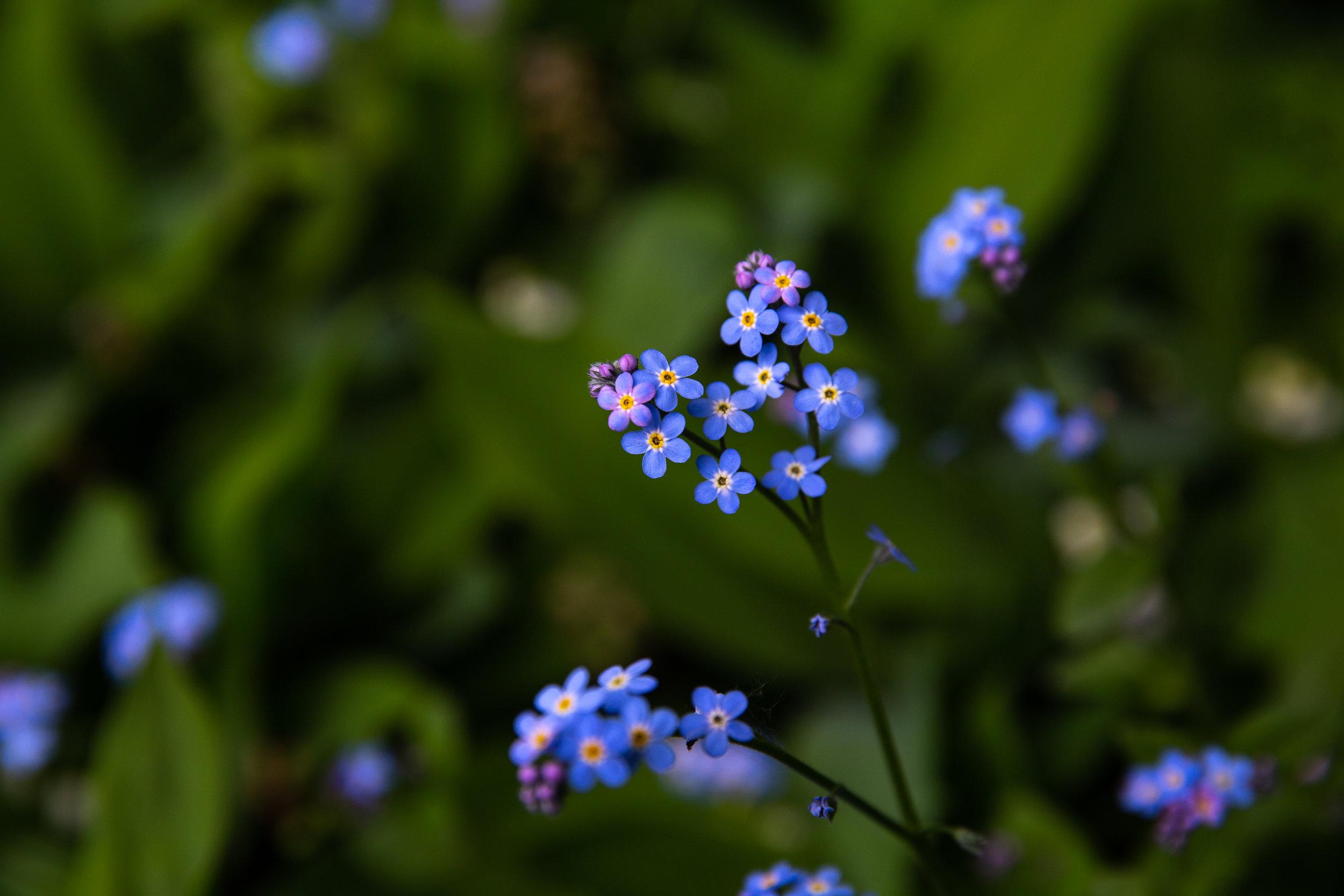 may 7 otis garden flowers oly 2018 5 star edits jenny l miller (76 of 368).jpg