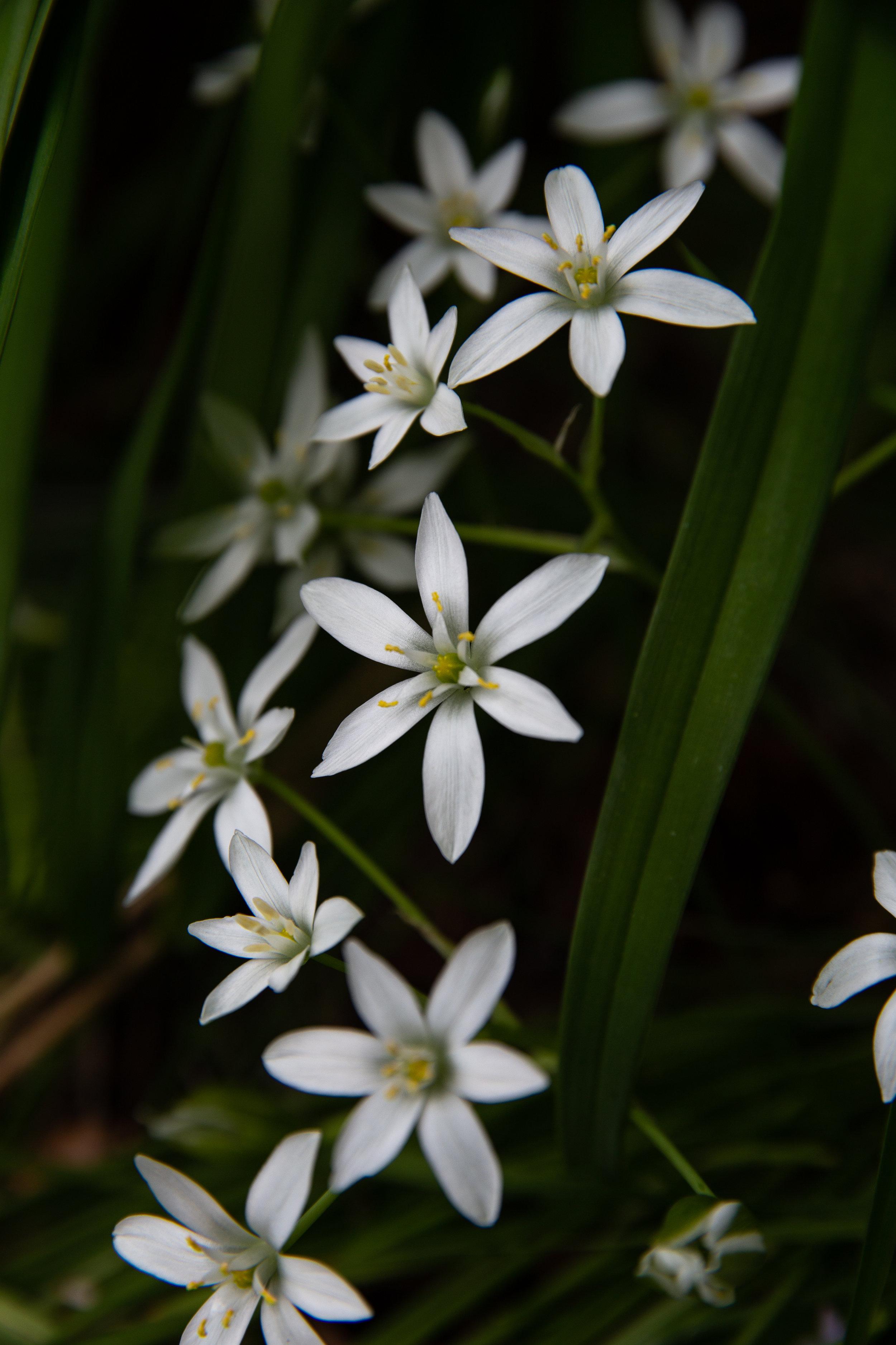 may 7 otis garden flowers oly 2018 5 star edits jenny l miller (87 of 368).jpg