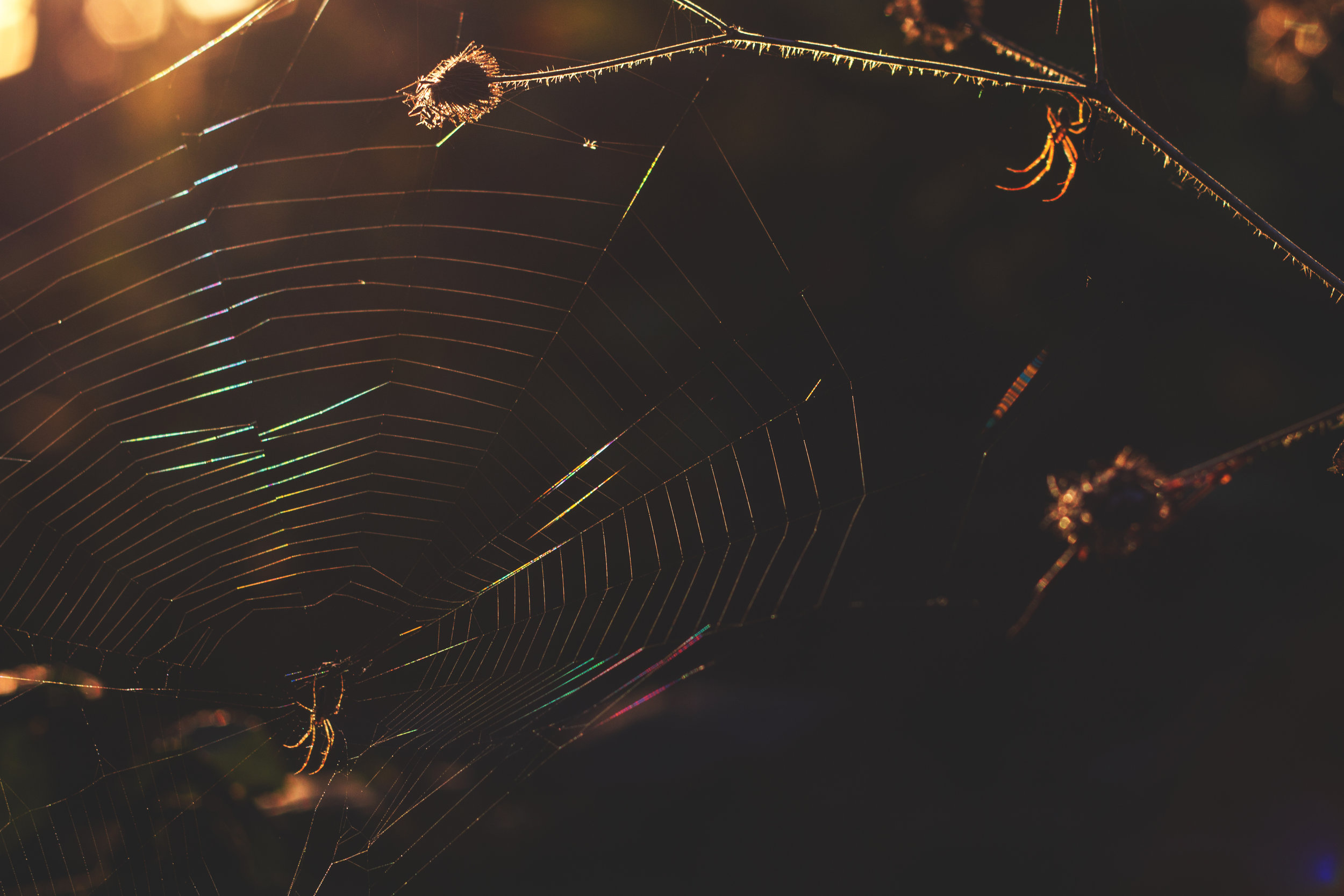 4 titlow park spider sunset 5 oct 2013.jpg