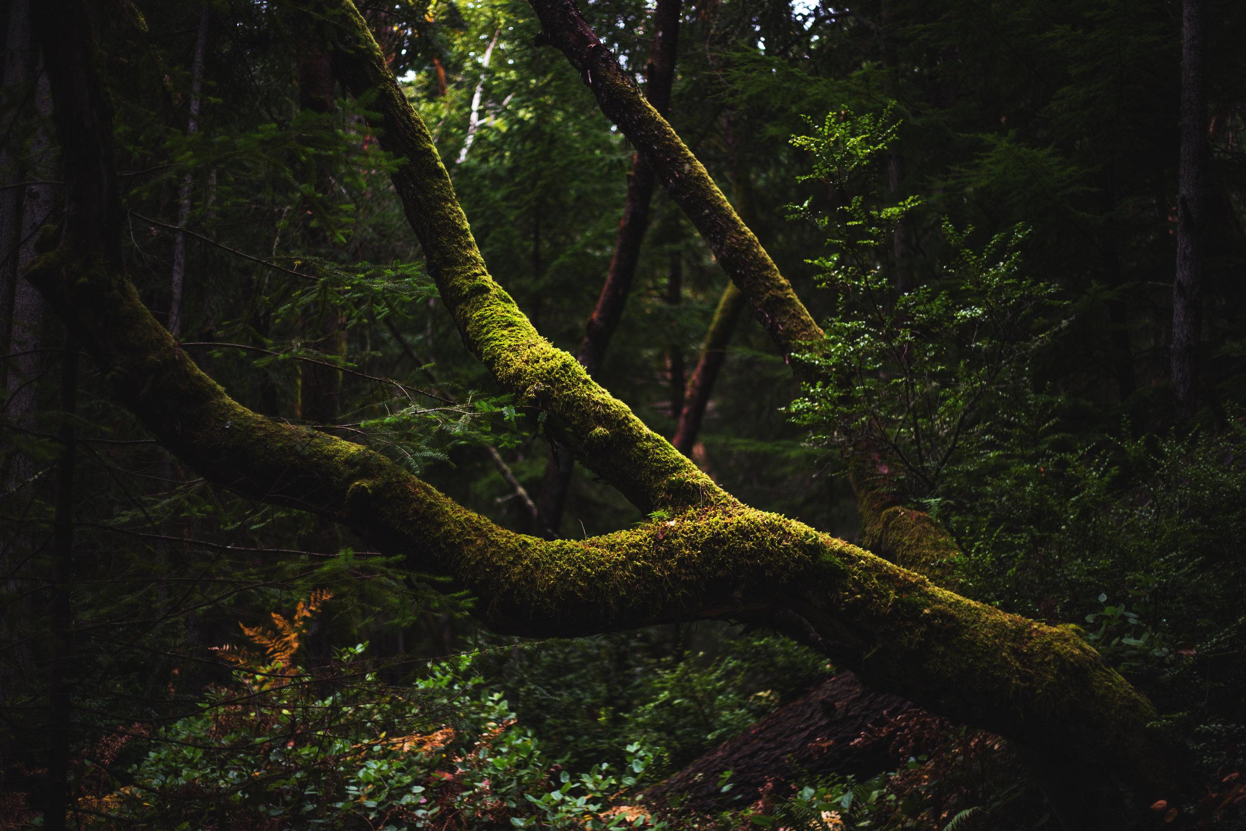 finished point defiance jenny l miller november 2017 mossy tree.jpg