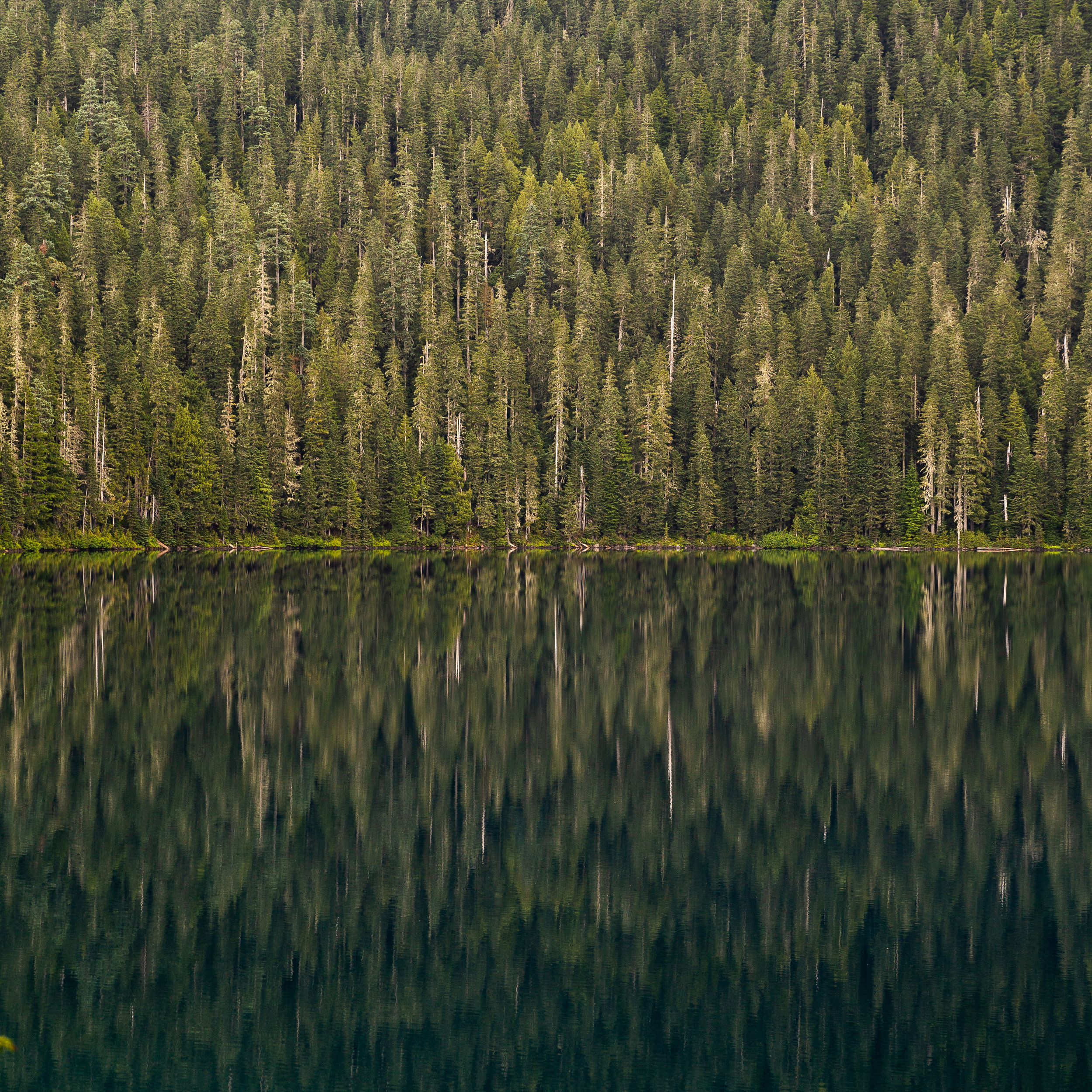 September 6 2019 mowich lake mt rainier carlos aventuras jenny l miller-132.jpg