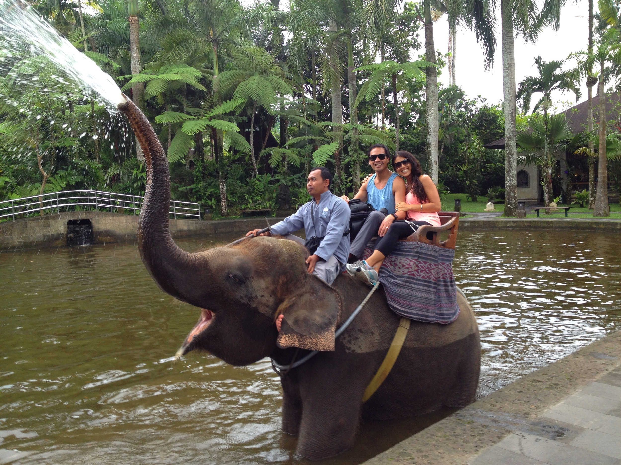 Our first elephant ride through the cacao plantations in Ubud. Cutest and happiest elephants we've ever seen!