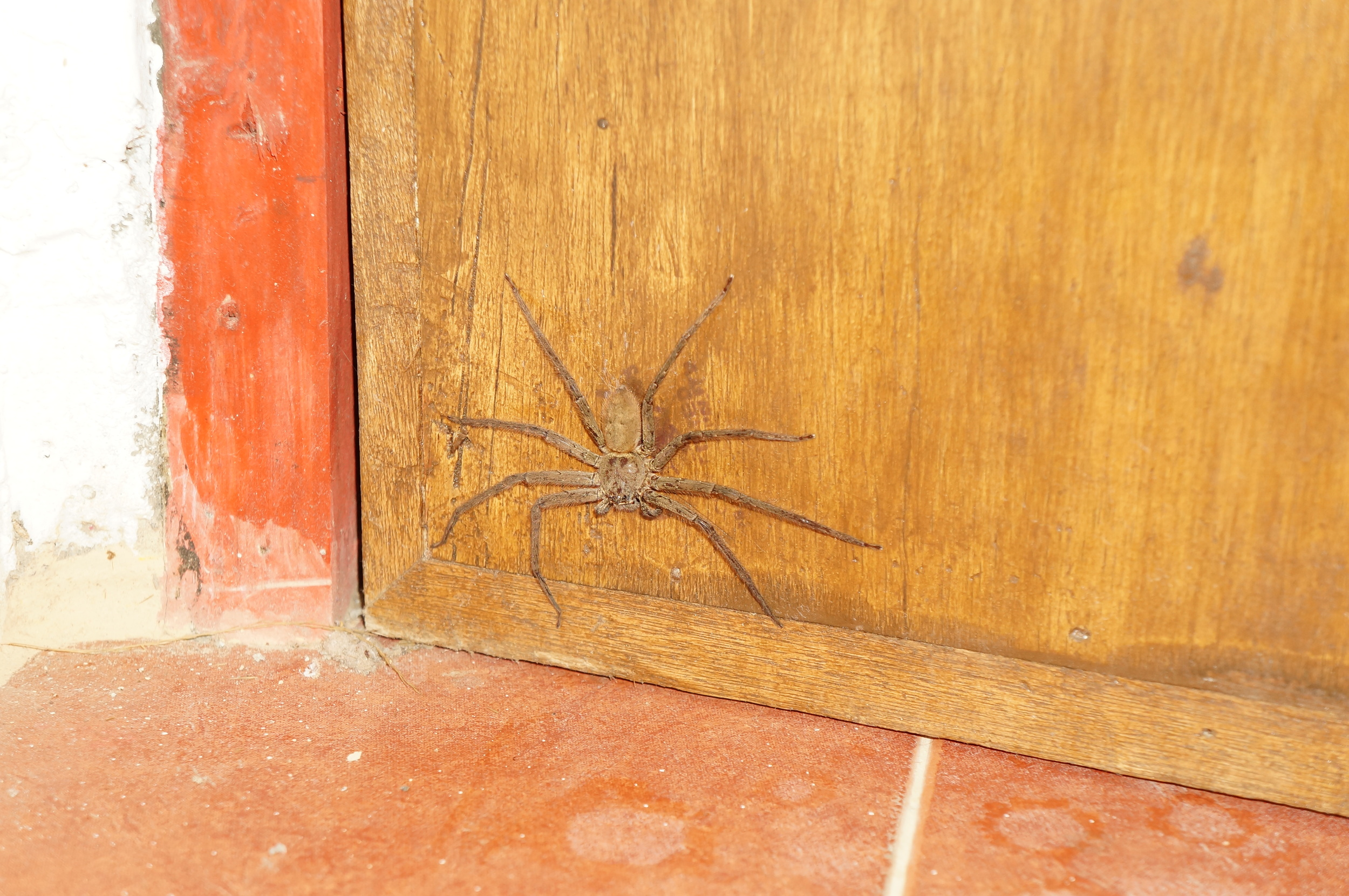 "Don't mind the spider in our bathroom! ""Totally harmless,"" says Jay."