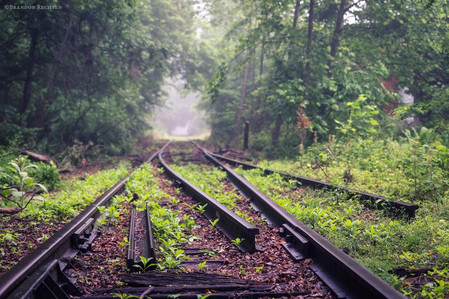 Who runs on my tracks tonight?'