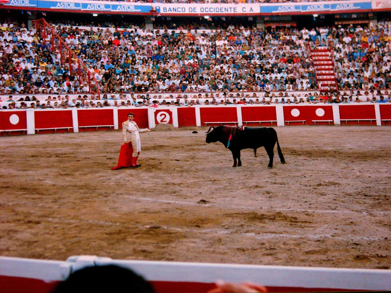 bull-fight.jpg