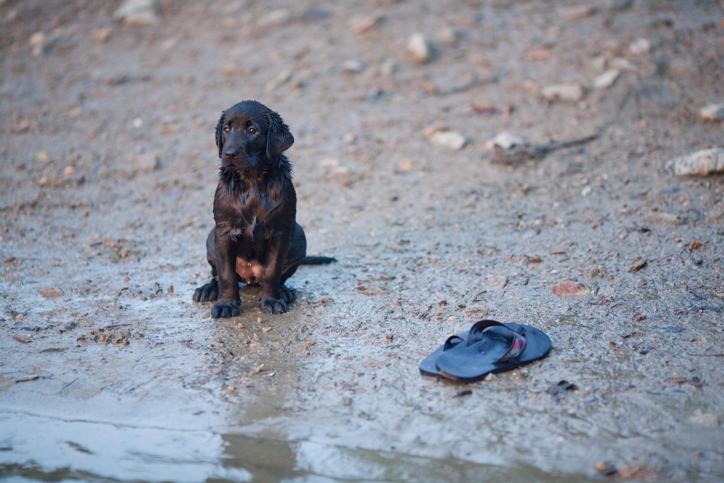 20120906 Rosie Mill Pond 300-006.jpg