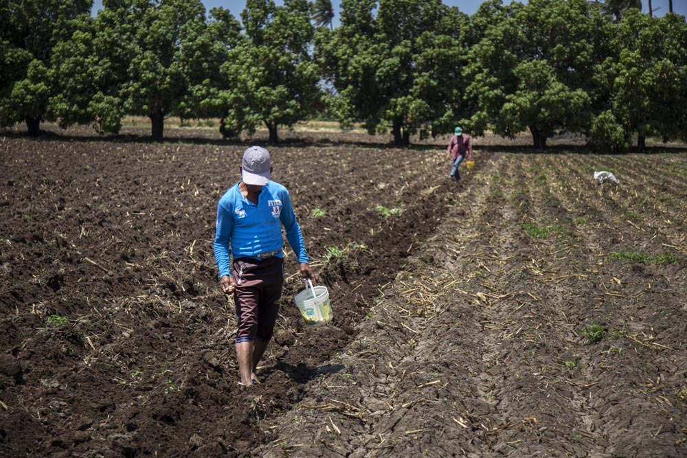 Dependiendo de la extensión del terreno, se pueden ocupar hasta dos o más sembradores.