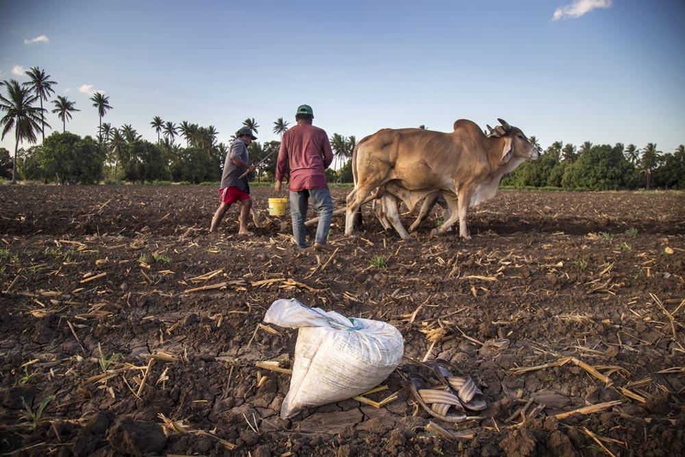 El trabajo se realiza descalzo por comodidad y para que se entierre con mayor facilidad el maíz entre la tierra y por la práctica heredada.