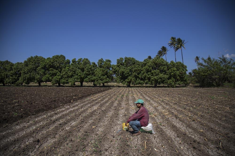Retrato de Juan, sembrador. En lo que la yunta abre el surco en la parte inferior del terreno Juan espera sentado en la soledad del terreno.
