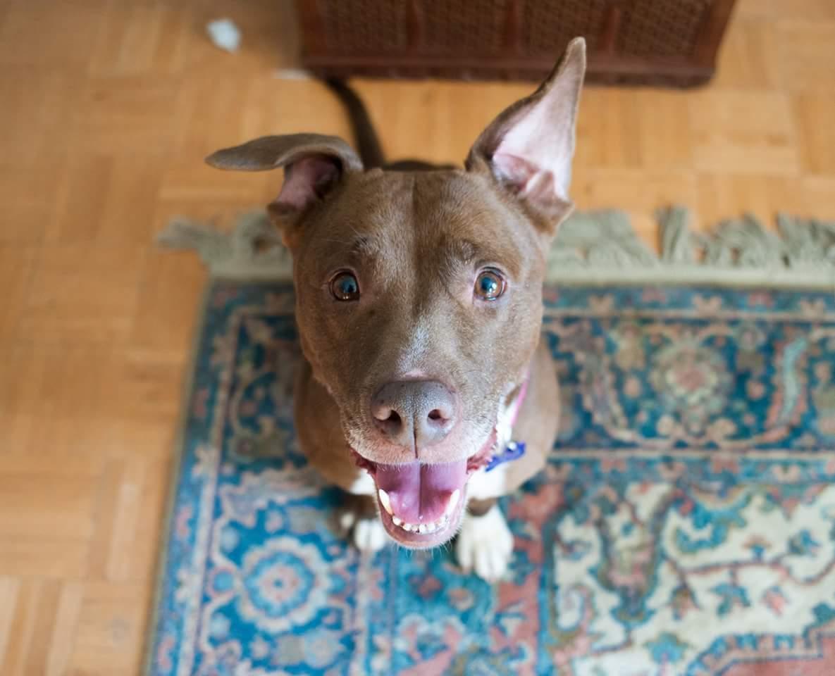 Thank Dog Rescue Raffle by Little Marketing Genius.JPG