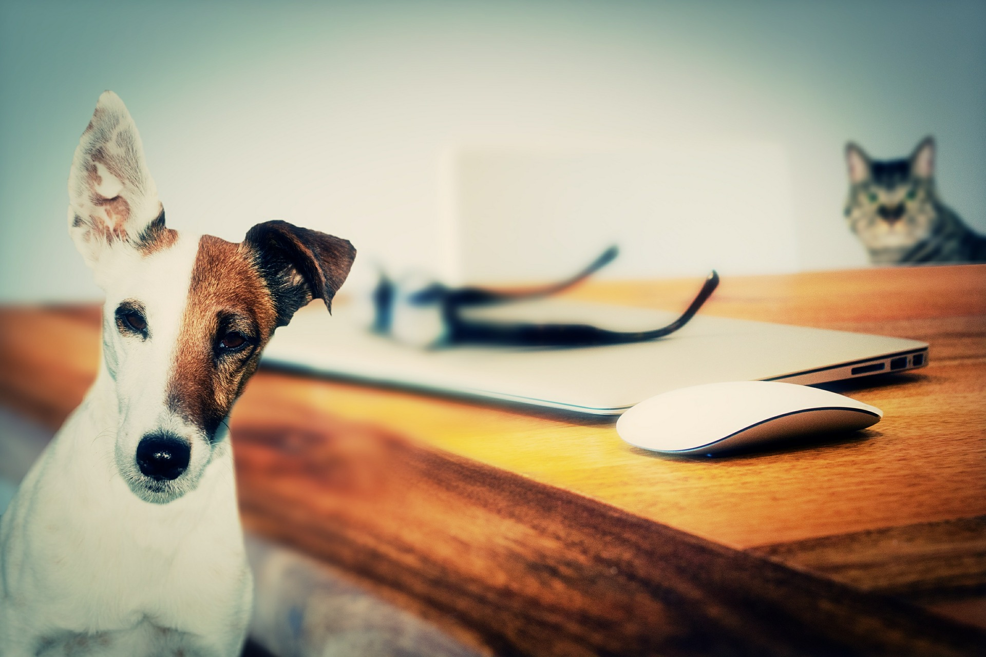 How To Write Social Media Posts for Adoptable Pets.jpg