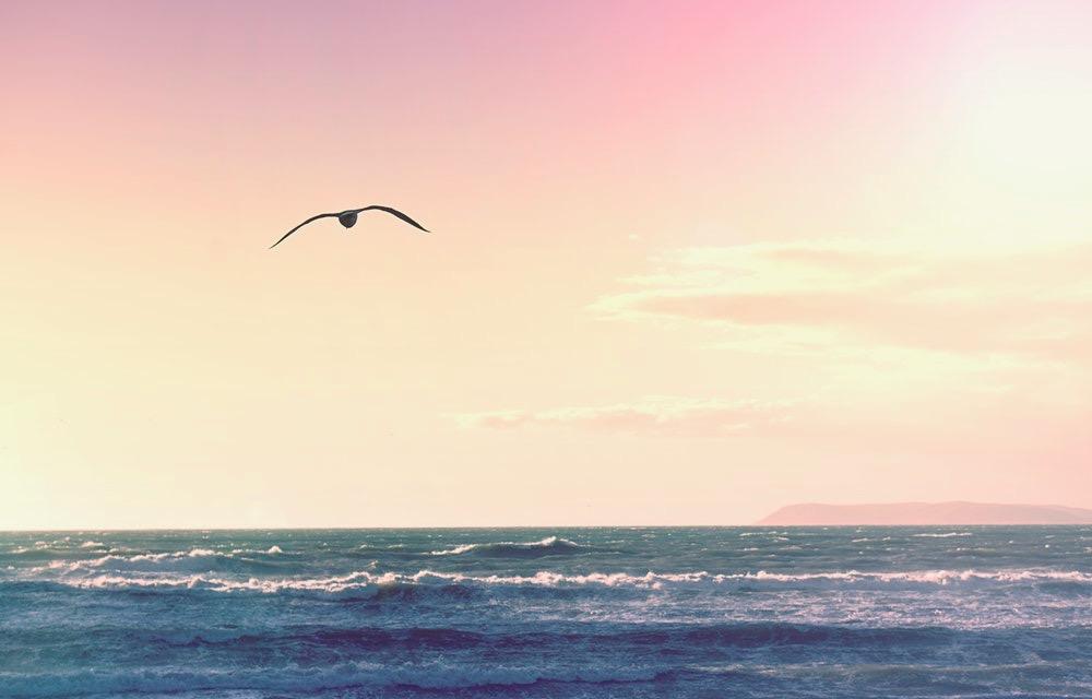 sea-gull-sunset.jpeg
