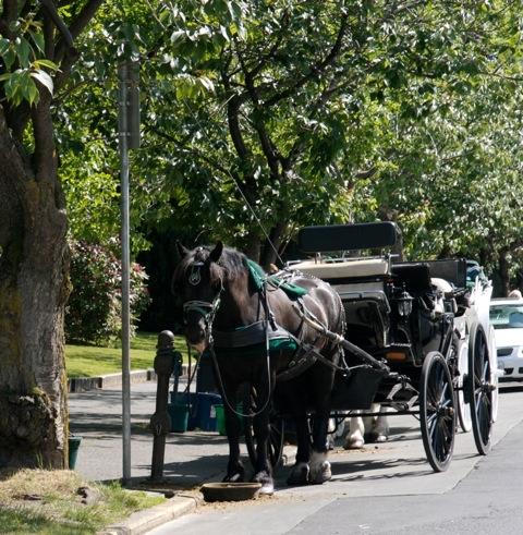 Carriage Rides Victoria BC