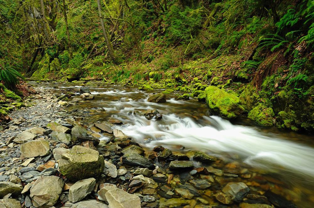nature stream.jpg