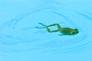 frog_in_pool