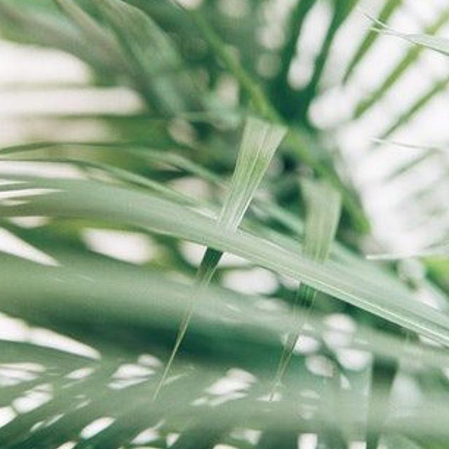 Palm Sunday of Holy Week 2019 . . .  May this holy and sacred time be a true blessing and anointing of God's endless love and mercy. Let us give Jesus the best of us; he deserves all our best and more. . . . 📸 Pinterest ... #palmsunday #holyweek #solemntime #catholic #catholiclife #christianlife #creativefiat
