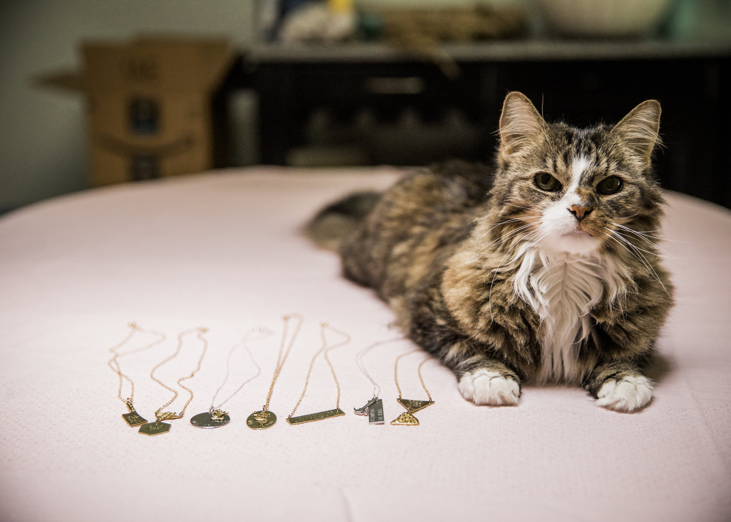 Betty, the boy cat behind the name Bang-Up Betty, an Arkansas handmade jewelry company.