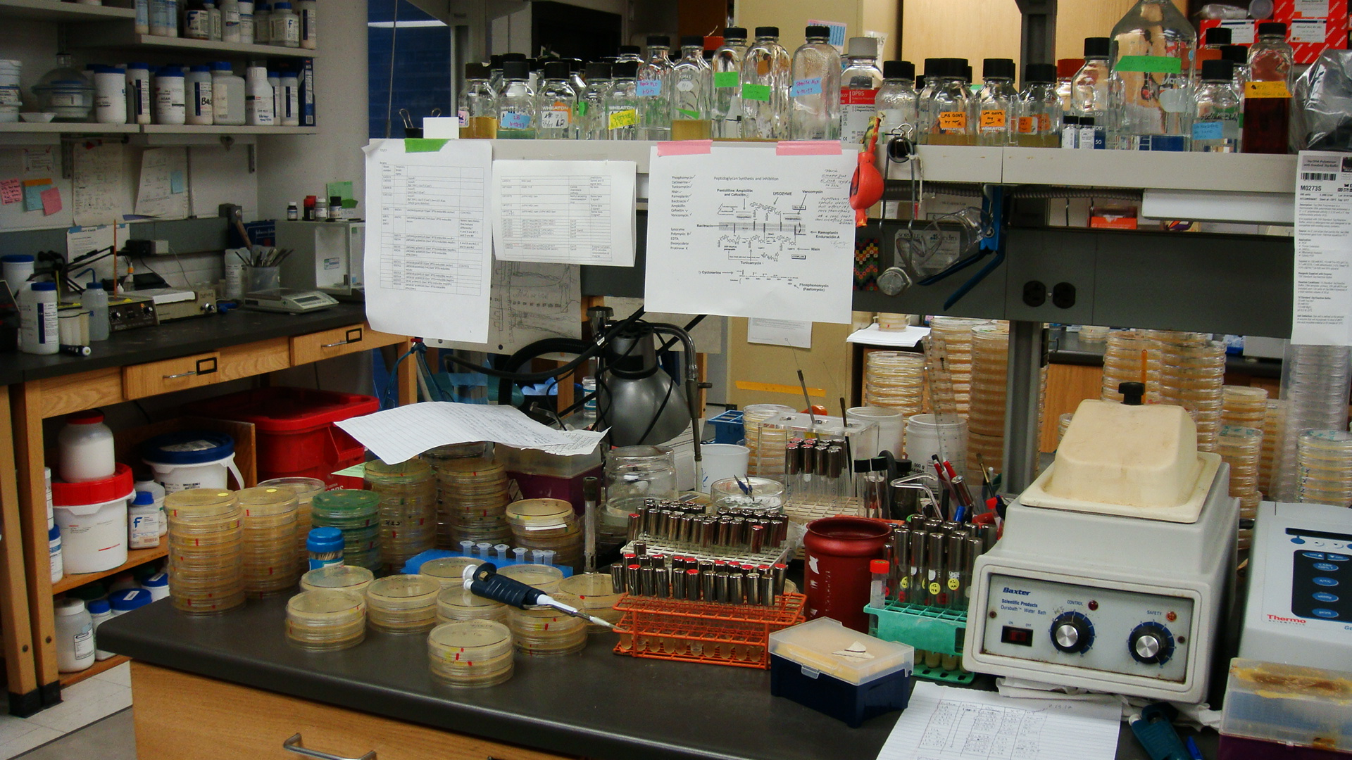 A particularly busy week at Guananí's lab bench. Photo by Guananí Gómex.