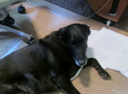 Star hates deadlines. She prefers the whooshing sound of her ragged tennis balls when they fly by.