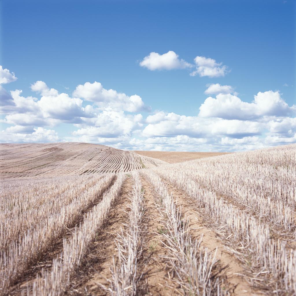 Cut Field #1
