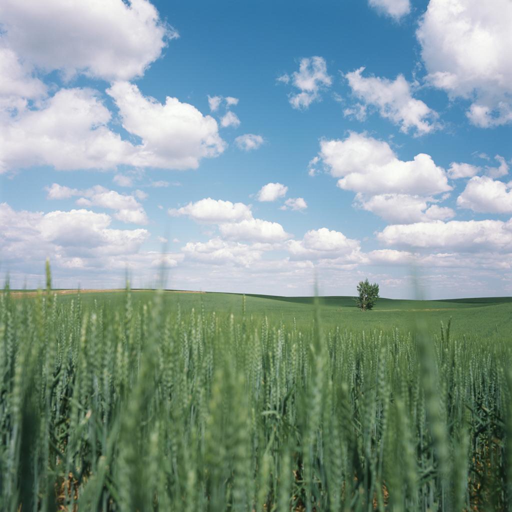 Green Field #2