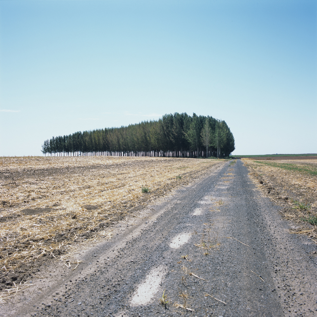 Copse and Gravel Road
