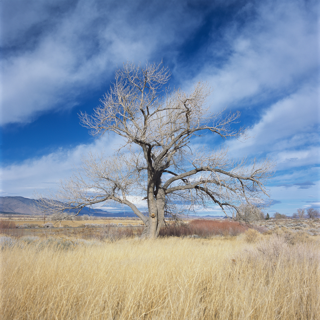 Nevada Tree & Cloudscape